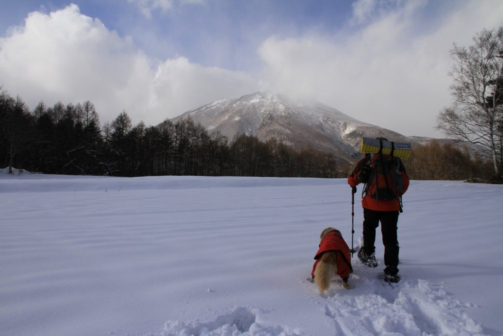 snowshoes with your pet